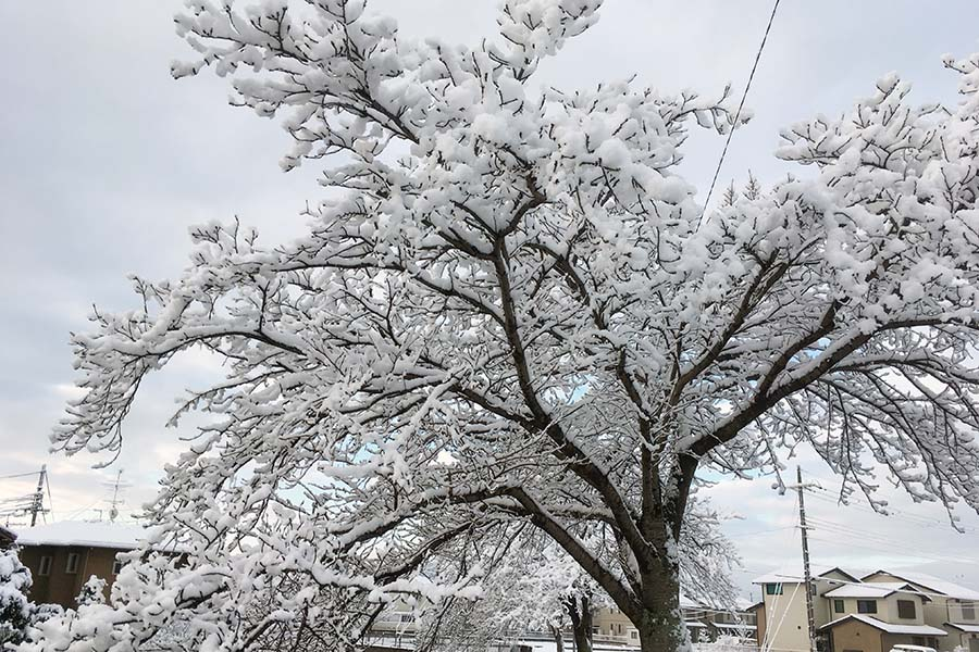 雪の京都は風情があります