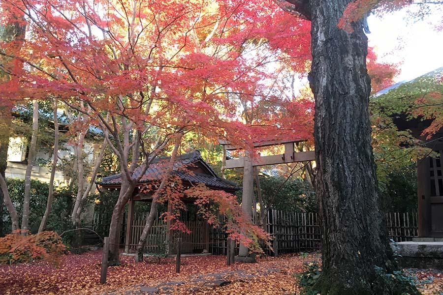 蓮華寺で紅葉狩り
